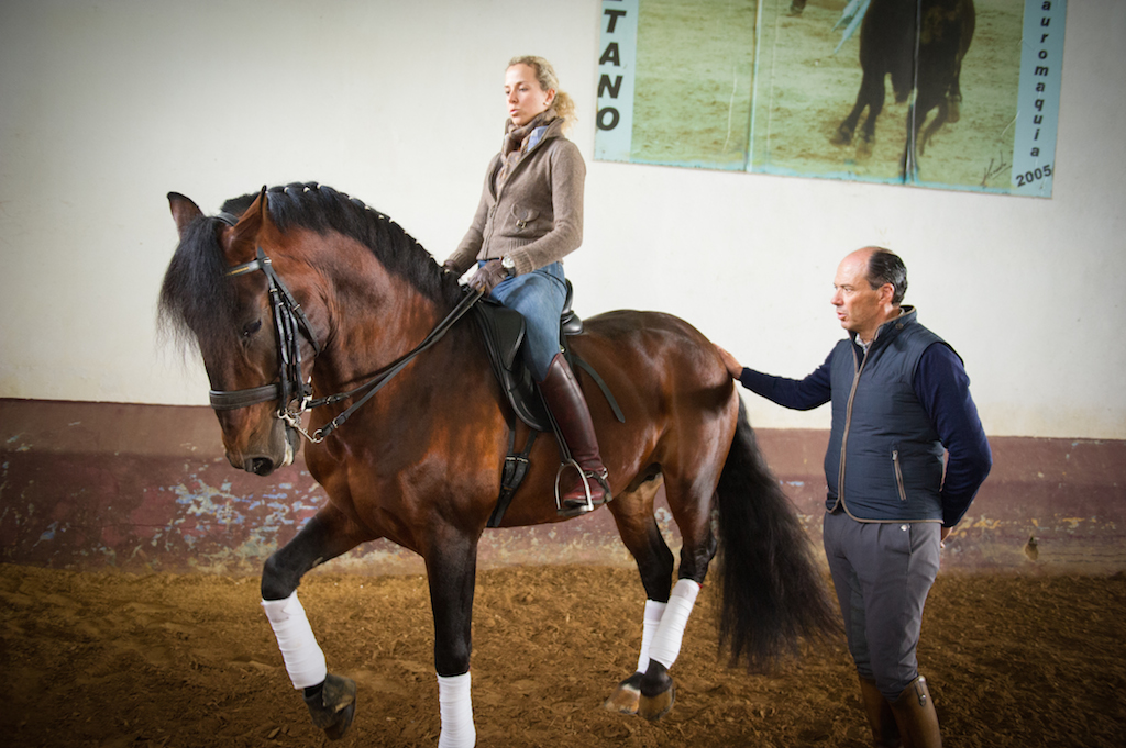 Maria Caetano From Classical To Modern Dressage